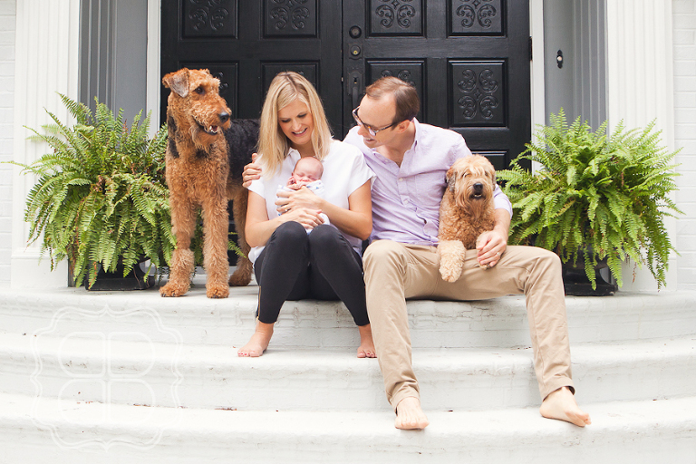 Newborn Baby Family Portrait With Dogs
